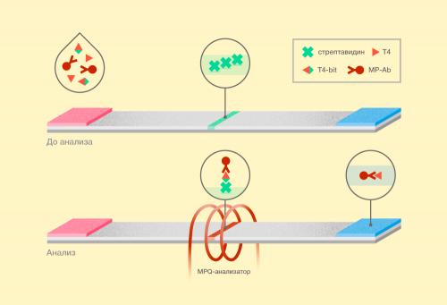 низкомолекулярные соединения