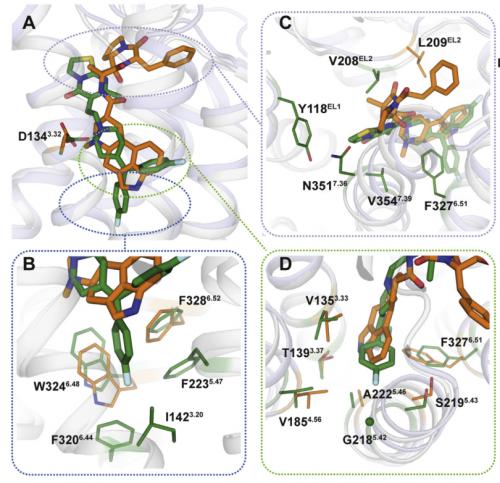 белок нервной системы
