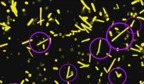 микроорганизмы в экстремальных условиях