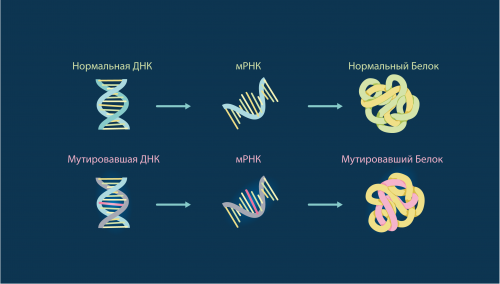 мутация ДНК