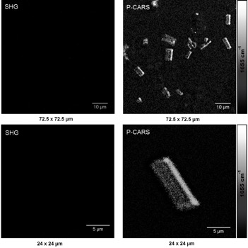 микрокристаллы мембранных белков