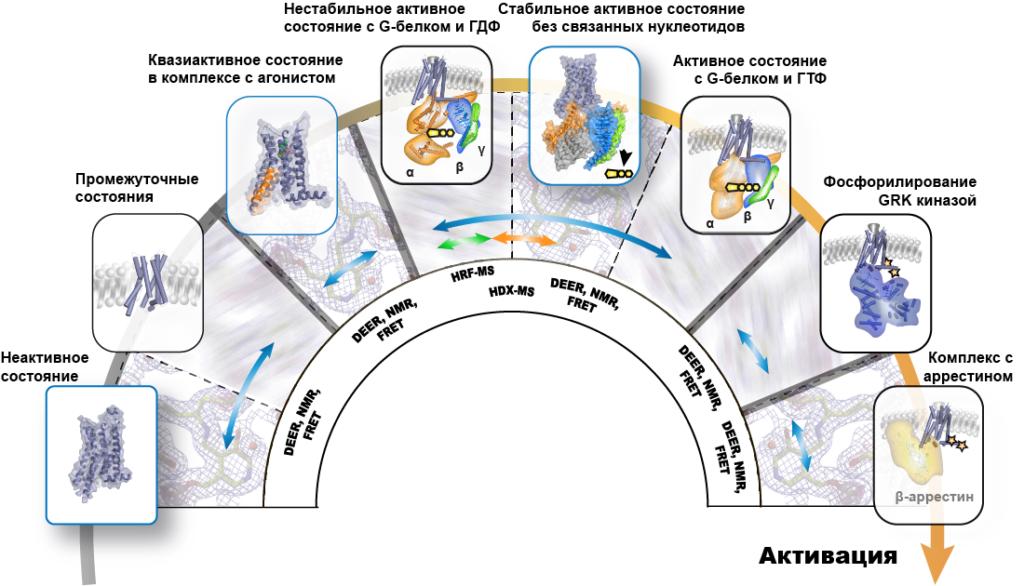 мембранных белков