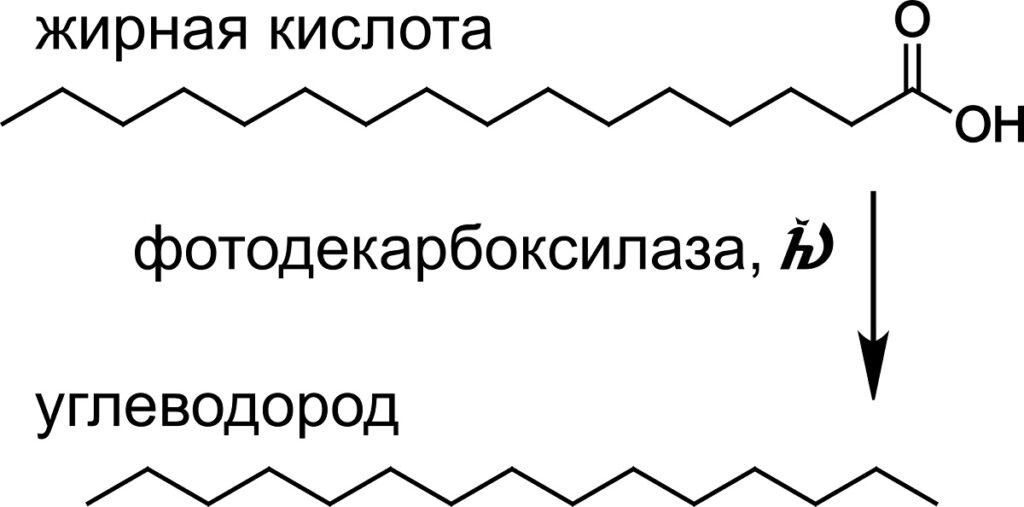 Метагеномика