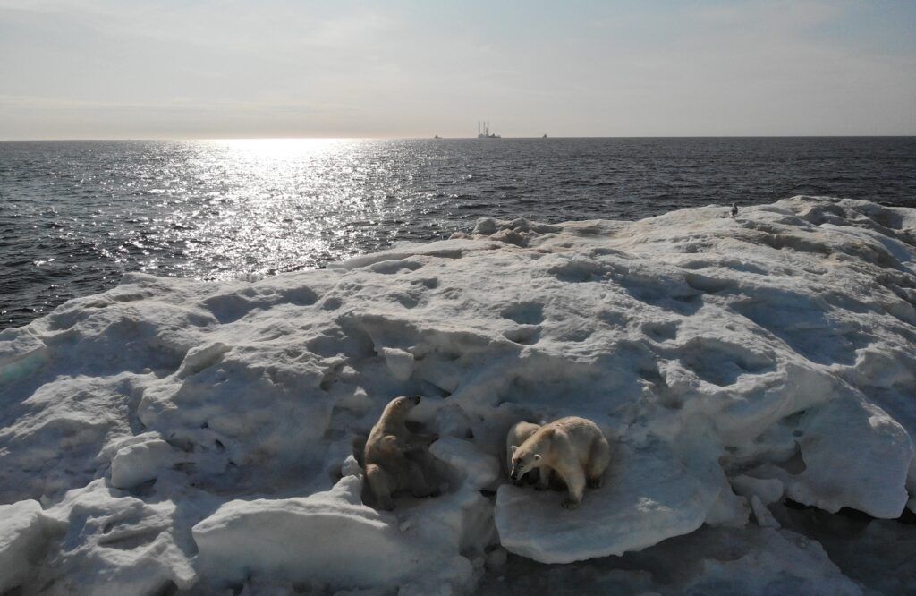 Арктики