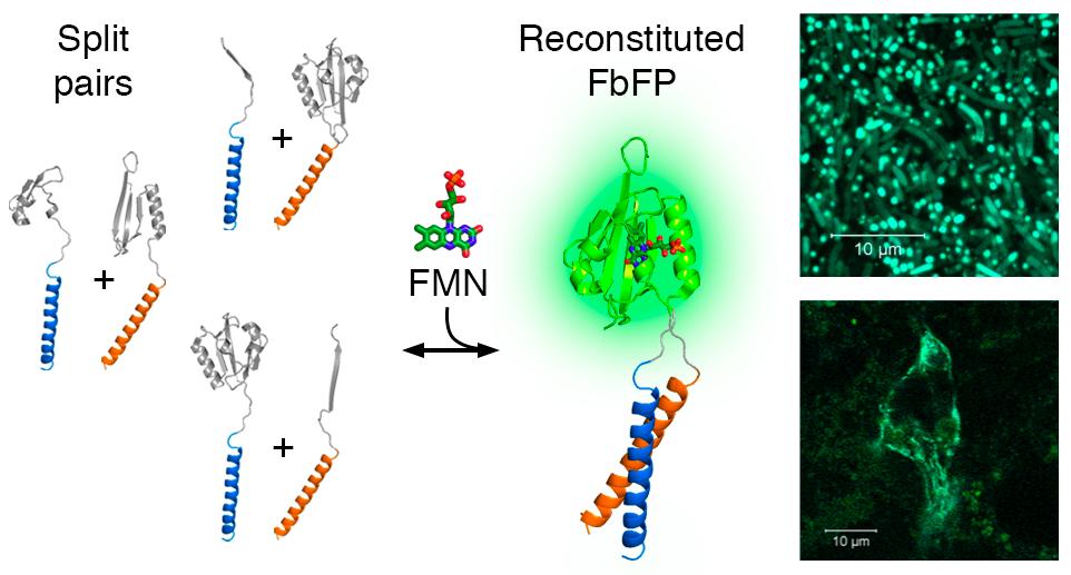 белковые взаимодействия