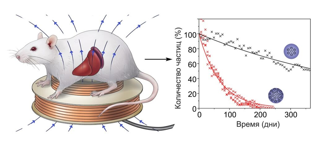 магнитных наночастиц